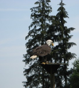 WildparkPoing_11
