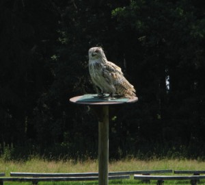 WildparkPoing_13