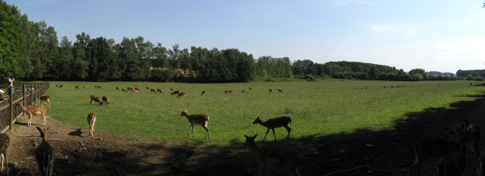 WildparkPoing_2