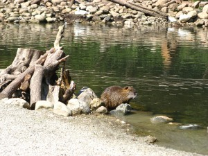 WildparkPoing_7