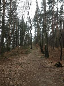 LiliensteinTrailrun_1